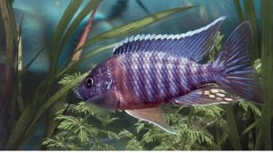 Most Popular Colorful Fish