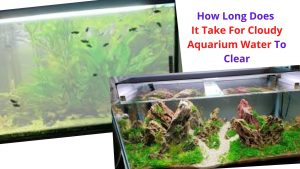 How Long Does It Take For Cloudy Aquarium Water To Clear