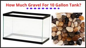 How Much Gravel For 10 Gallon Tank