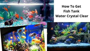 How To Get Fish Tank Water Crystal Clear