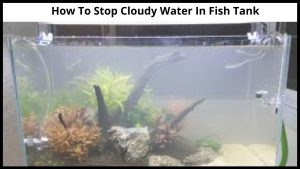 How To Stop Cloudy Water In Fish Tank